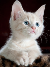 Normally I'd have a supporting image here, since we're talking human ailments, I'm just going to post a cute kitten...